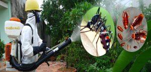 diệt muỗi tai vũng tàu