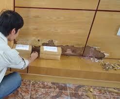 Đặt hộp nhử mối để diệt mối