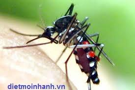 phun muỗi tại Bà rịa