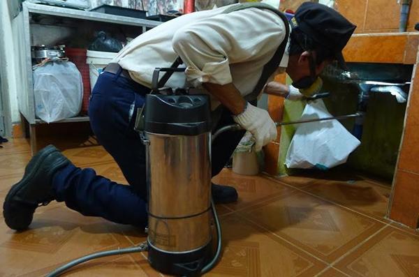 quy trình diệt mối Quảng Ngãi phương pháp hóa sinh học