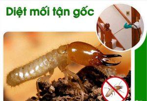 diet moi tan goc huyen Binh Chanh chuyen nghiep