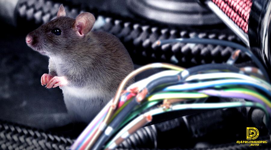 dịch vụ diệt chuột tại Long Thành