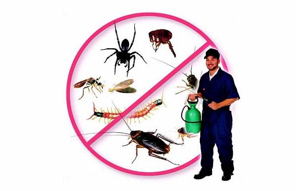 dịch vụ phun thuốc diệt muỗi tại Vũng Tàu