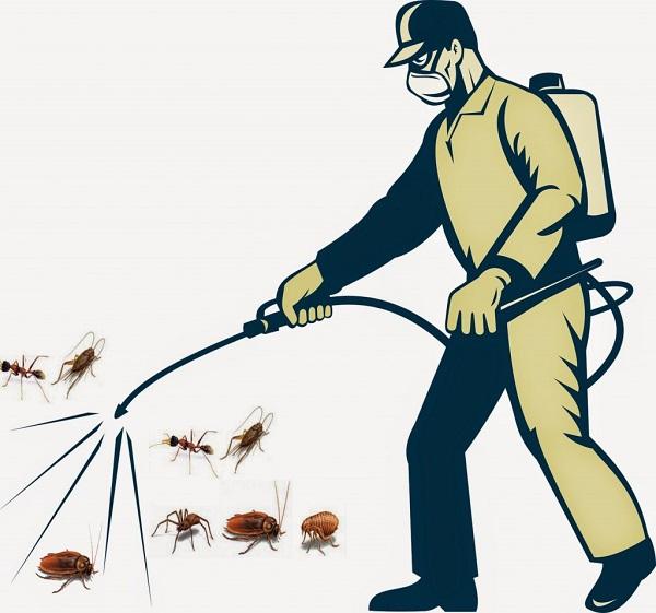 giá dịch vụ phun muỗi tại vũng tàu