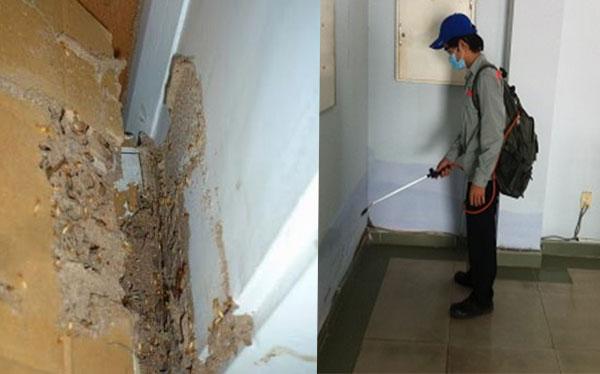 dịch vụ diệt mối mọt tại Long Khánh, Đồng Nai