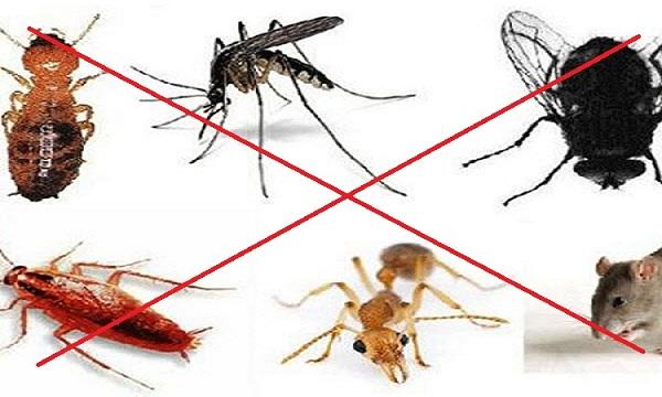 hướng dẫn xử lý diệt côn trùng