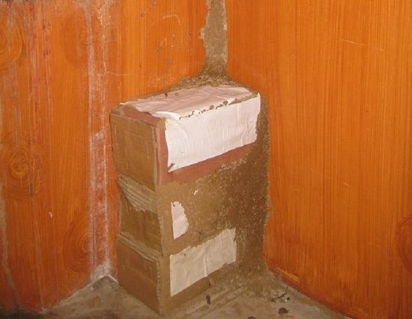 hướng dẫn cách đặt hộp nhử mối
