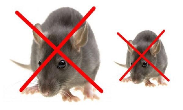 dịch vụ diệt chuột tại Mỹ Xuân